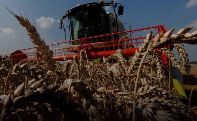 فائو: گرانی جهانی مواد غذایی رکورد ۱۰ ساله زد